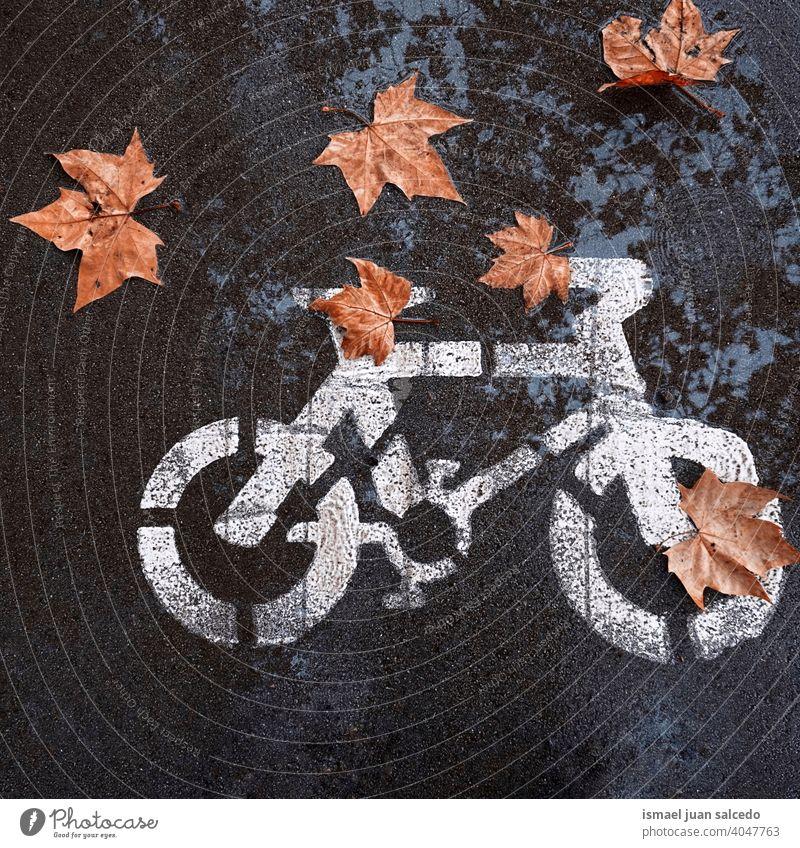 braune Blätter auf dem Fahrrad Verkehrsschild auf der Straße Pfütze Wasser nass reflektiert Reflexion & Spiegelung Ampel Zyklus Fahrradsignal signalisieren