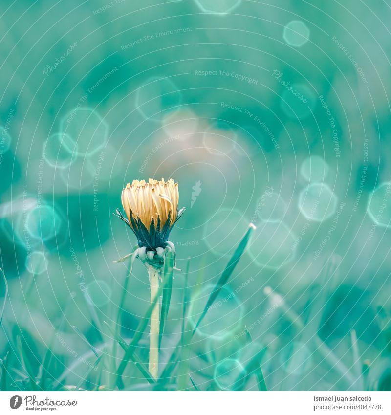 schöne gelbe Blume im Frühling Saison, grüner Hintergrund Blütenblätter Pflanze Garten geblümt Flora Natur natürlich dekorativ Dekoration & Verzierung