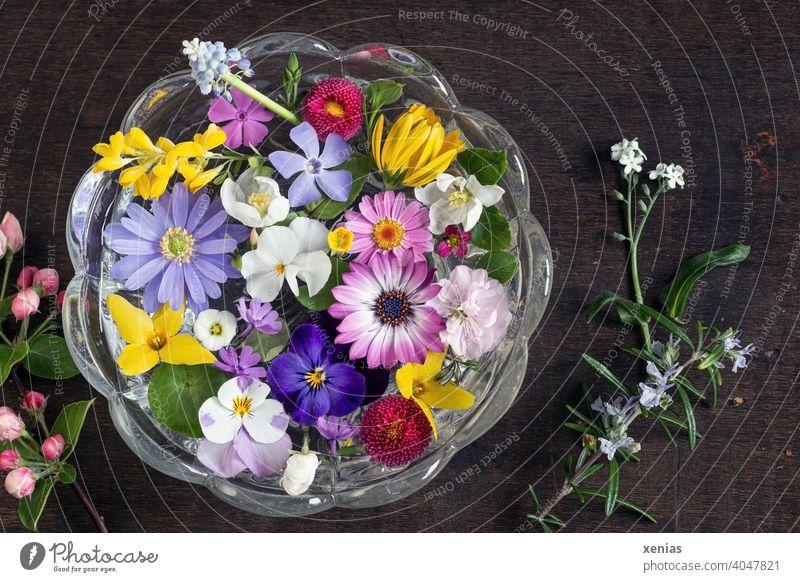 Frühlinghaftes buntes Potpourrie mit Blüten aus dem Garten schwimmt dekorativ und duftend in einer runden Glasschale auf dunklem Holzuntergrund Blumen