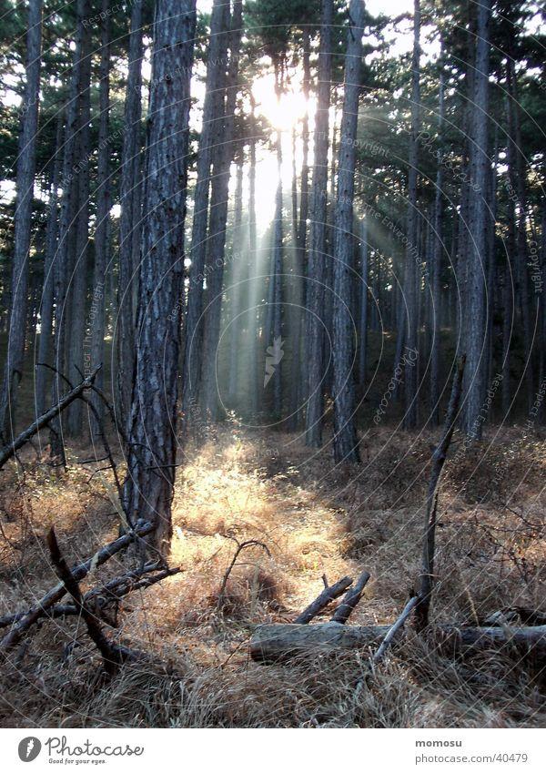 lichtblick Wald Baum Lichteinfall Sonnenstrahlen Unterholz mystisch Gras Berge u. Gebirge
