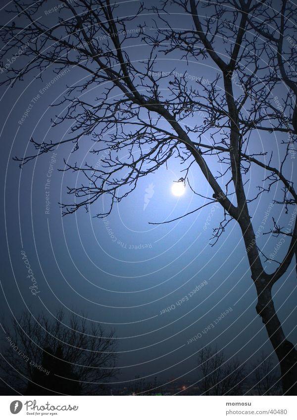 vollmond Vollmond Nacht Baum dunkel Licht Mond