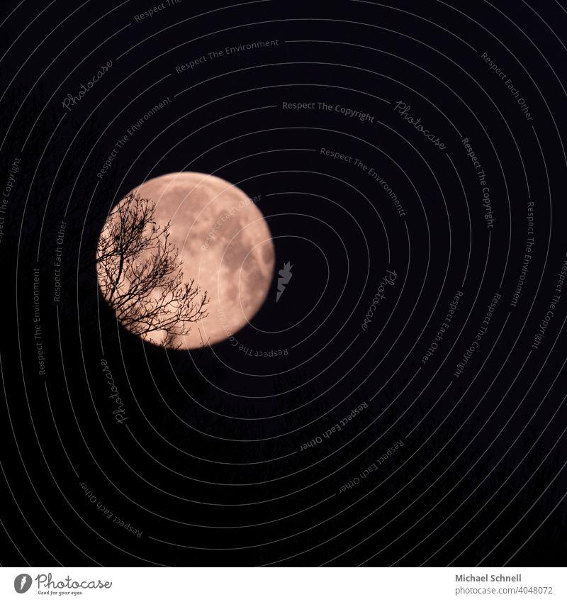 Vollmond hinter Baumverästelungen Nacht Mond Himmel dunkel Licht Mondschein Natur Nachthimmel Farbfoto Romantik romantisch Ruhe Stimmung