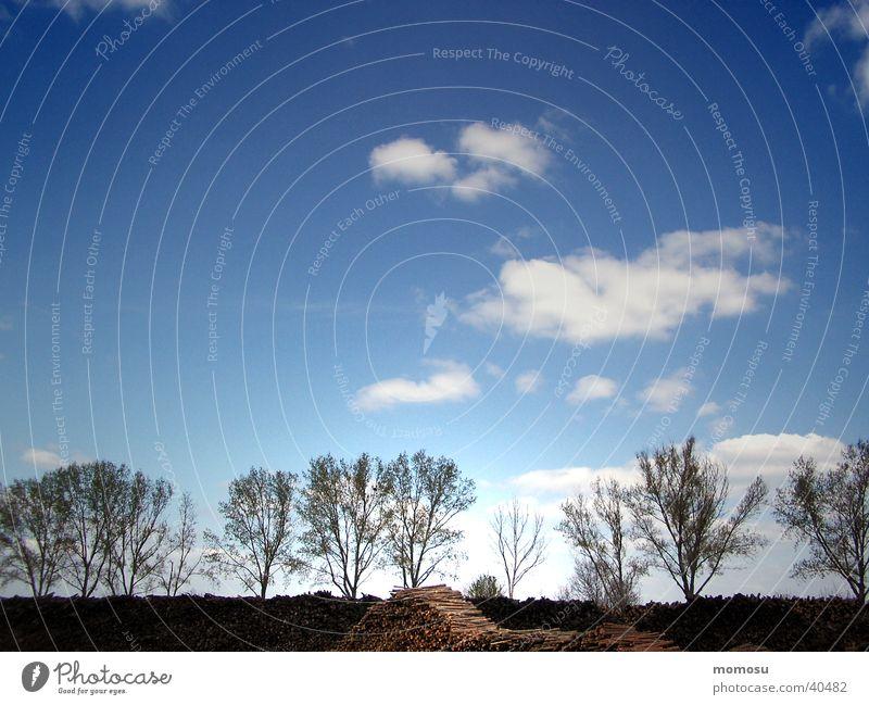 nebeneinander Himmel blau Wolken Holz Linie Stimmung