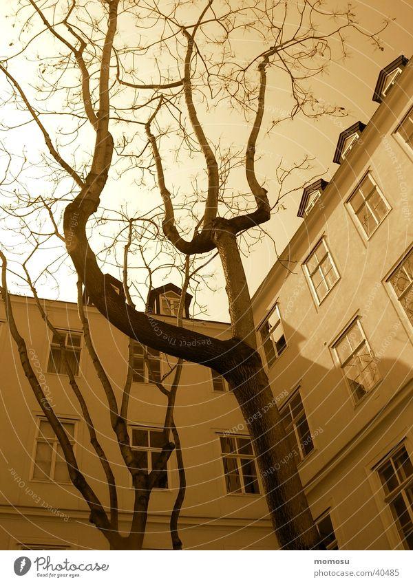 baumwärts Wien Baum Stimmung Licht Architektur Innenhof Sepia