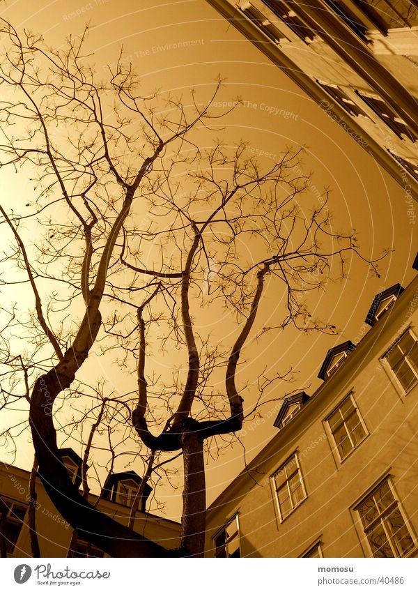 baumwärts 2 Wien Baum Stimmung Licht Architektur Innenhof Sepia