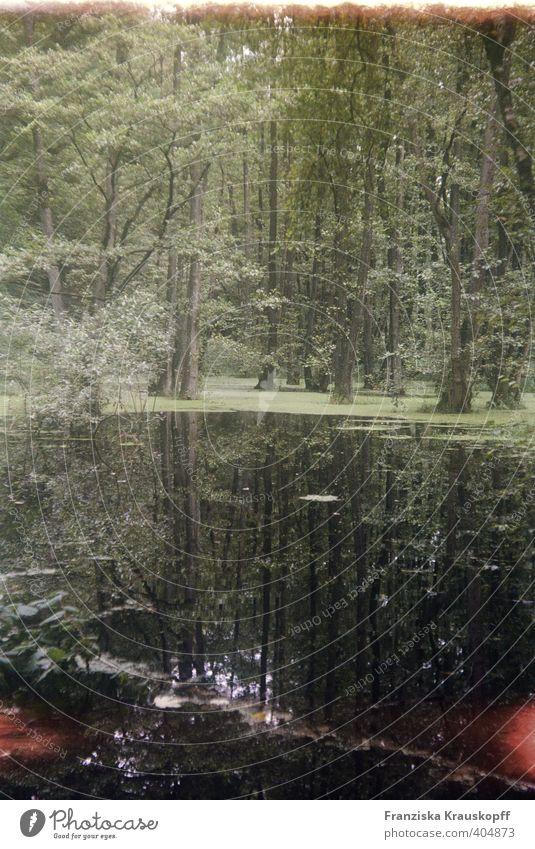 Wasserwald Umwelt Natur Landschaft Pflanze Sommer Klima Klimawandel Wetter Baum Sträucher Moor Sumpf Teich See Menschenleer ästhetisch außergewöhnlich grün