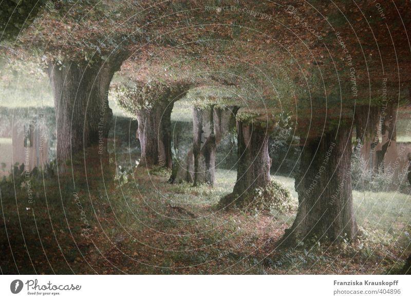 Tunnel Landschaft Pflanze Erde Sommer Baum Moos Park Wald außergewöhnlich bedrohlich dunkel fantastisch Unendlichkeit gruselig braun grün Überraschung träumen