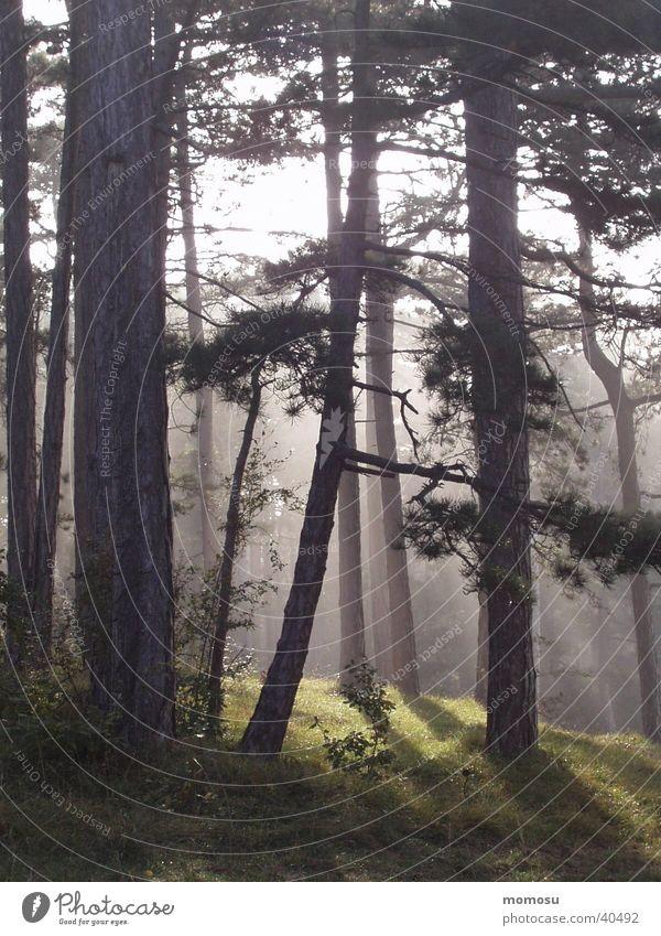 mystic morning Baum Wald Nebel