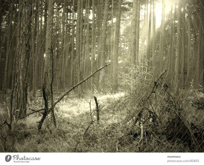 keltenwald Wald Holz Stimmung mystisch Kelten