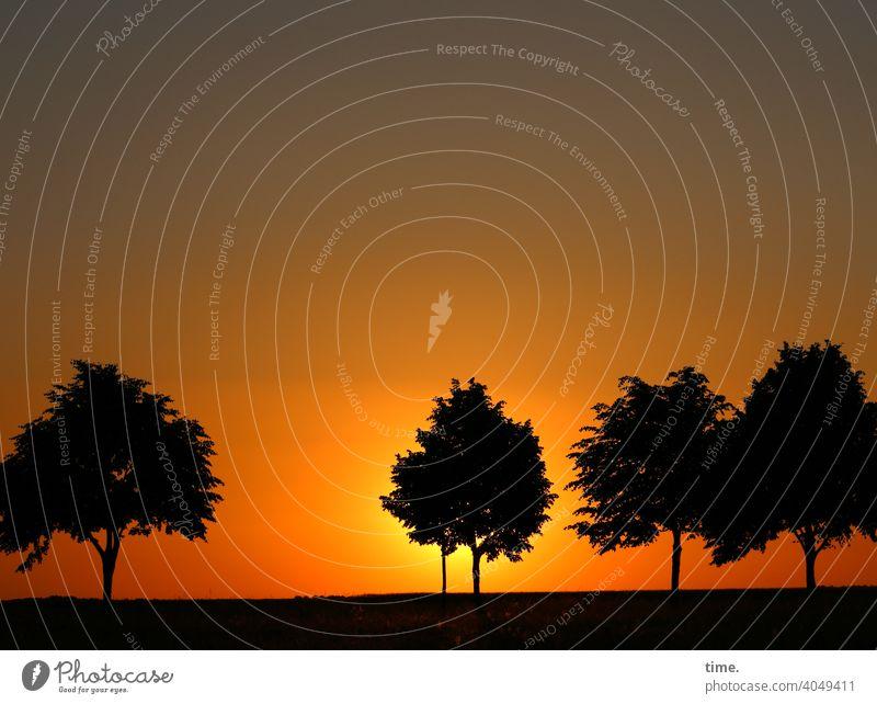 early seventies wallpaper abend bäume sonnenuntergang kitsch horizont abendhimmel baum versteck stimmung Gefühlsduselei klischee fototapete luft rot abschied