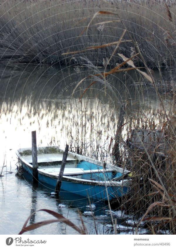 ruhetag See Wasserfahrzeug Ruderboot Schilfrohr Neusiedlersee Mörbisch