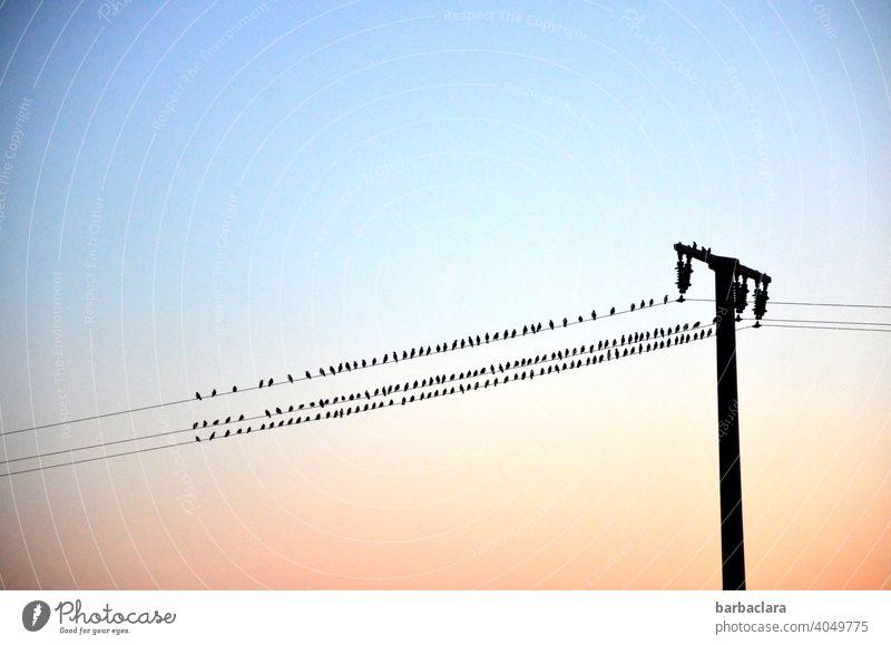 Vögel auf der Leitung Vogelschwarm Stromleitung Sonnenuntergang Abendrot Strommast Umrisslinie