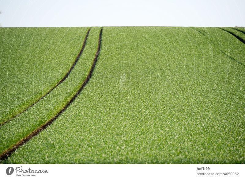 Getreidefelde im vollen Frühlingsgrün Weizenfeld Korn Wachstum Trecker Spuren Feld Umwelt Lebensraum insektensterben artensterben Monokultur-Landwirtschaft