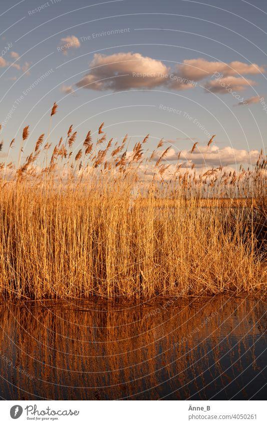 Am Wasser bei Sonnenuntergang mit Wolken Schilf Schilfrohr Abenddämmerung Vorflutkanal an der Havel Gras Himmel Überschwemmt Wiesen Pampasgras Lebensraum