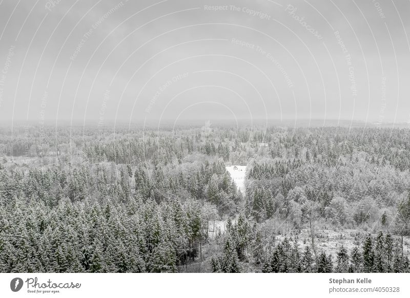 AERIAL: Flying over frozen snowy treetops towards countryside isolated little house in the middle of a snow covered forest in panoramic view. winter nature