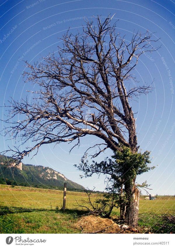 zu-neigung Baum Wiese Berge u. Gebirge Zuneigung stur