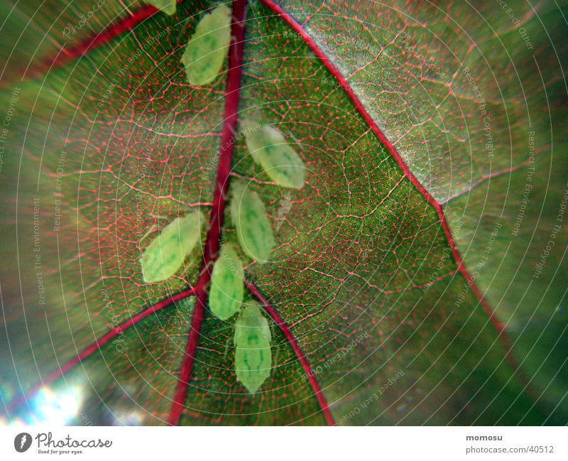 lausig Baum Blatt Schädlinge Laus