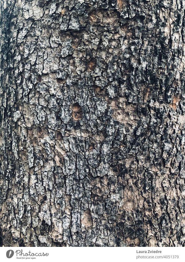 Näher am Baum und der Natur Baumstamm Kofferraum Baumrinde Rinde Wald Holz Pflanze braun Textur texturiert Holzstruktur texturierter Hintergrund alt natürlich