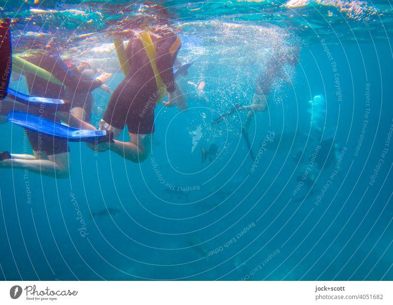 schnorcheln und tauchen im großen Blau Schwimmen & Baden Pazifik Leichtigkeit Unterwasseraufnahme Sonnenlicht Schnorcheln erleben Schnorchler Meer Wassersport