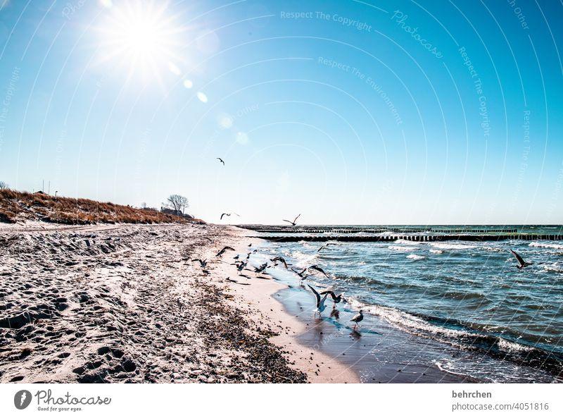 wo die ostseewellen trecken an das land blau träumen Fernweh Sehnsucht weite Himmel Ostsee Natur Wasser Wellen Strand Meer Darß Ferien & Urlaub & Reisen