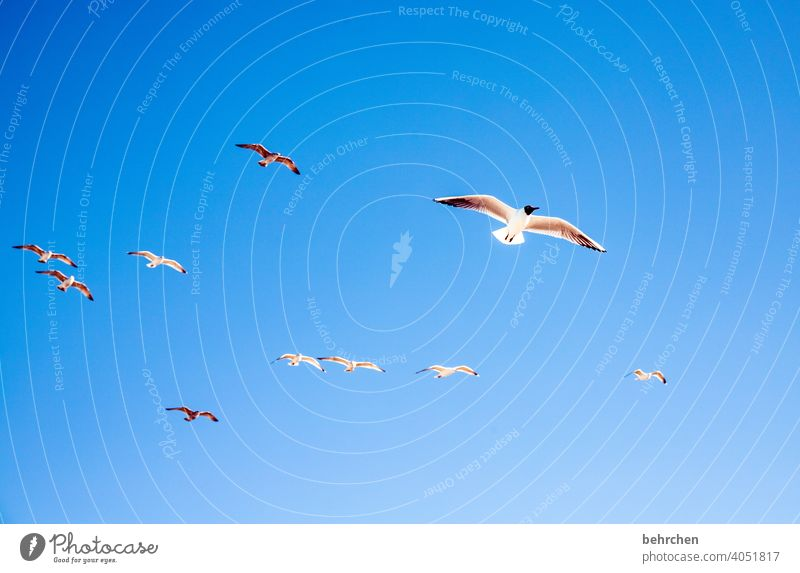 freiheit Vögel möwen Freiheit Fischland-Darß Ostseeküste Mecklenburg-Vorpommern Außenaufnahme Farbfoto Ferien & Urlaub & Reisen Meer Strand Natur Himmel weite
