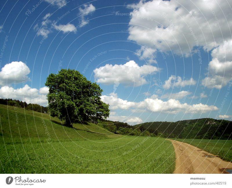 wie im bilderbuch Baum Wolken Wiese Gras grün Berge u. Gebirge Himmel Wege & Pfade Straße