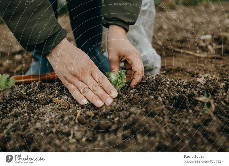 Close up Frau Hände pflanzen Salat Nahaufnahme Hand Garten Gartenarbeit Pflanze Pflanzen Bepflanzung Arbeit Frühling Wachstum Hobby Natur grün Bioprodukte