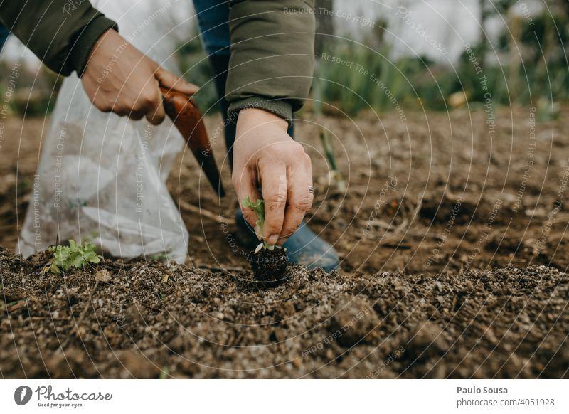 Close up Frau Hände pflanzen Salat Pflanze Bepflanzung Samen Bioprodukte organisch Biologische Landwirtschaft Garten Gartenarbeit Gärtner Kopfsalatblatt