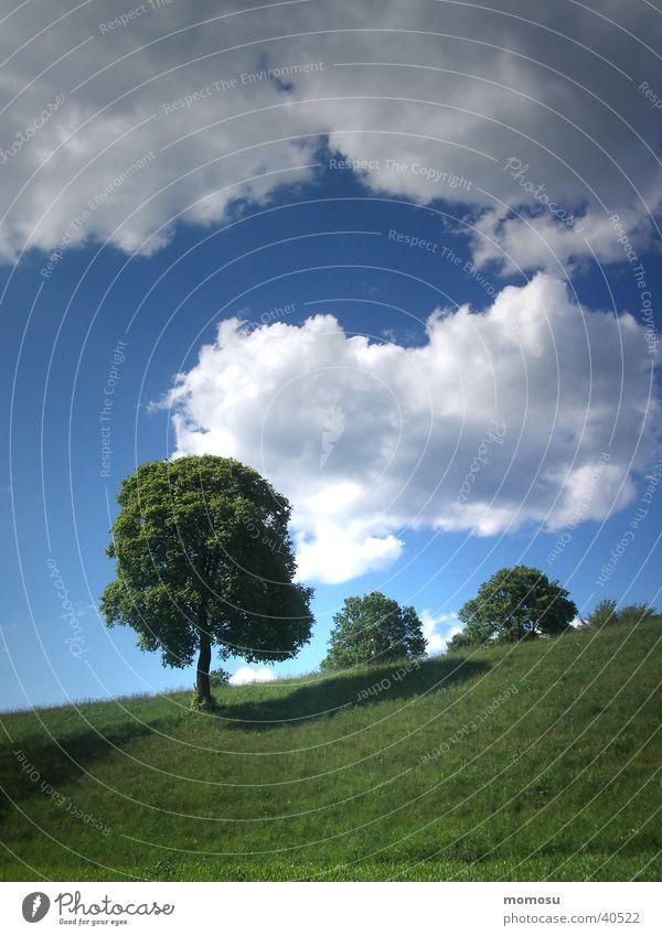 bergauf Himmel Baum Wolken Wiese Gras Berge u. Gebirge Frühling