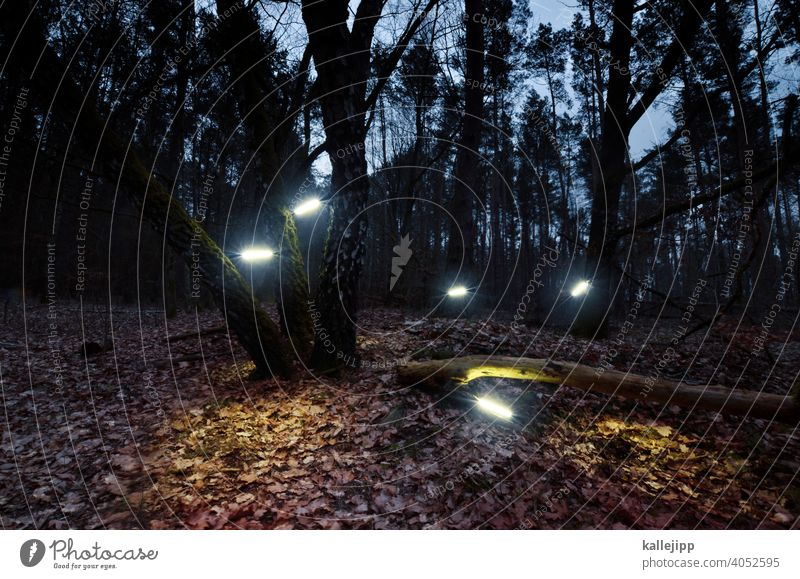 illuminati Baum Wald Beleuchtung Illumination Neonlicht Herbst Lampe Nacht Glühbirne Lichtinstallation Strahlung Natur Baumstamm Beleuchtungselement leuchten