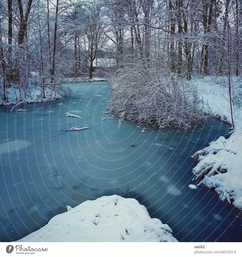 Tümpel Umwelt Natur Wasser Winter Eis Frost Schnee See frieren kalt blau natürlich gefroren Wasseroberfläche Außenaufnahme Menschenleer Farbfoto Tag
