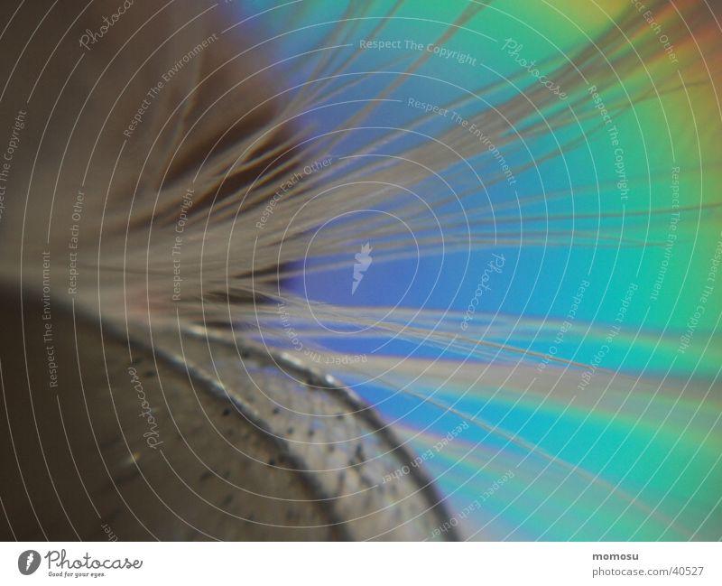Feenflügel träumen Flügel Regenbogen Fantasygeschichte Inspiration