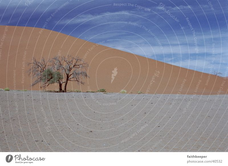 red desert Baum Landschaft Wüste Blauer Himmel Namibia