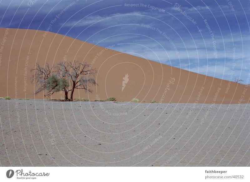 red desert Namibia Baum Wüste Blauer Himmel Landschaft Sonenschein