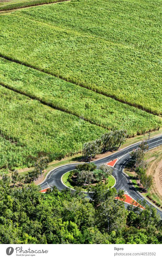 aus dem Hochfeld der Kolutivierung Feld Ansicht hoch Antenne Winkel Top Ernte Bauernhof grün Ackerbau Natur Mais oben Land Landschaft Pflanze Gras