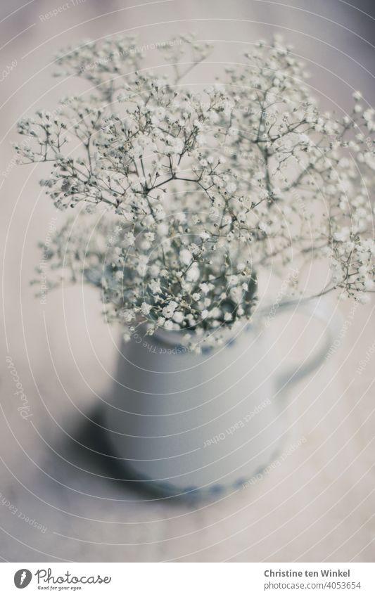 zartes duftendes Schleierkraut in einer alten Porzellankanne Blume Blüte weiß Schwache Tiefenschärfe Blühend Vase Gedeckte Farben Vogelperspektive grau
