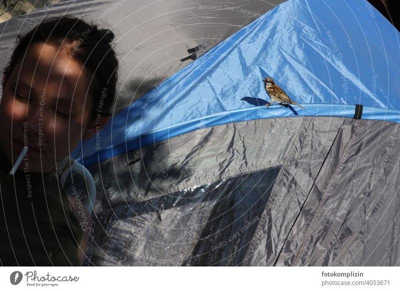 neugieriger Vogel am Zelt Mädchen Zigarette Spatz frech wagen gewagt keck Neugierde Urlaub Tierkommunikation Aufmerksamkeit beobachten niedlich witzig Tierliebe