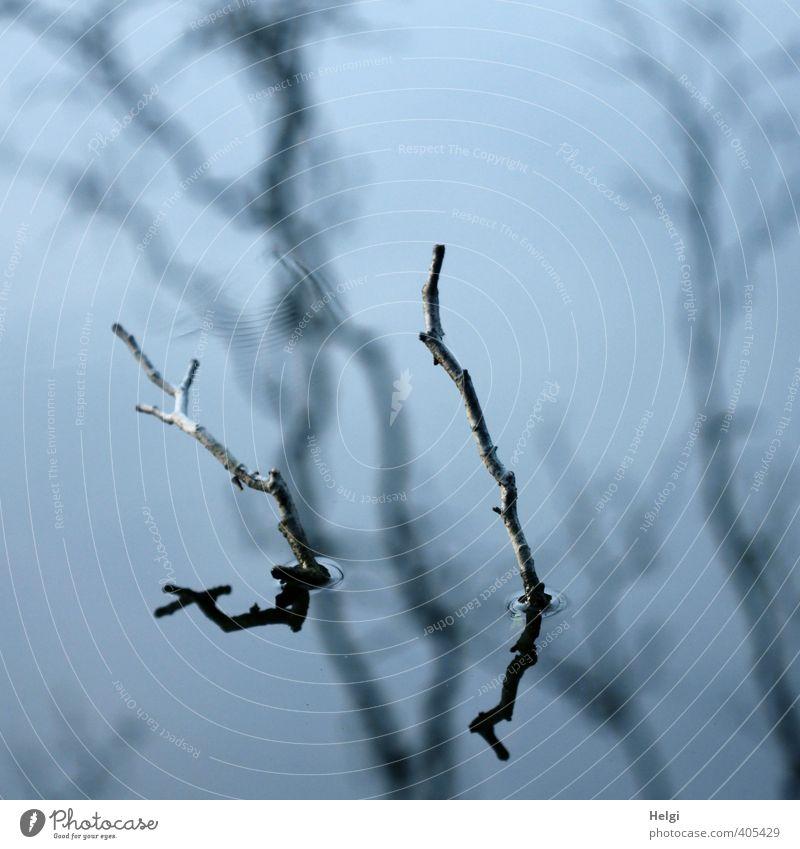 Spiegelungen | bizarr... Natur blau alt Wasser Sommer Baum Einsamkeit ruhig schwarz Umwelt grau See natürlich außergewöhnlich stehen authentisch