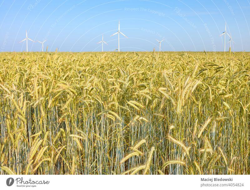 Getreidefeld mit Windmühlen im Hintergrund. Feld Ackerbau Bauernhof Ernte Himmel Umwelt Technik & Technologie Natur Elektrizität Mühle alternativ regenerativ
