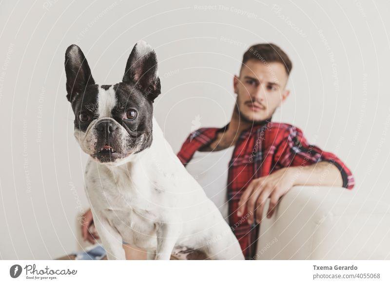 Vordergrund der Französisch Bulldogge Hund sitzt auf einem Sofa mit seinem Freund im Hintergrund französische Bulldogge Junge Piercing durchbohrt Hut Ohrringe