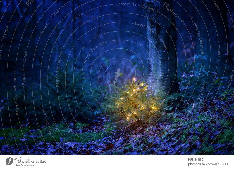 wenn ich mal gross bin werde ich ... Weihnachten & Advent Weihnachtsdekoration Weihnachtsbaum Lichterkette Weihnachten feiern Tannenbaum winzig klein