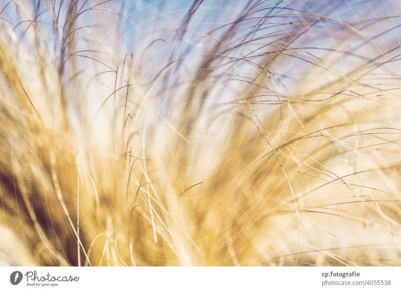 unscharfe gelbe Grashalme Pflanze feingliedrig Unschärfe Menschenleer Büschel Schönes Wetter