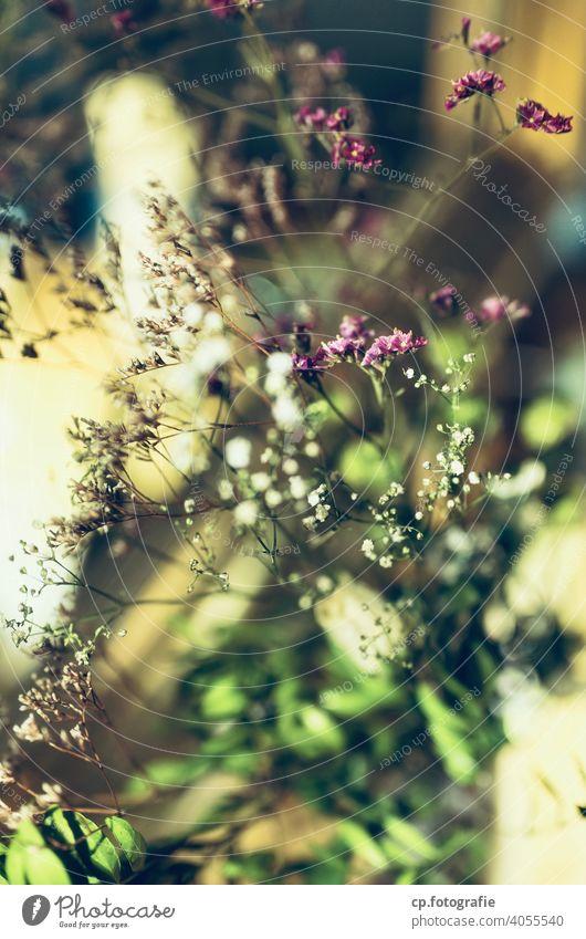 Strauß getrockneter Blumen vor Spiegel Trockenblume Blüte Unschärfe Menschenleer Farbfoto Nahaufnahme Schwache Tiefenschärfe Innenaufnahme
