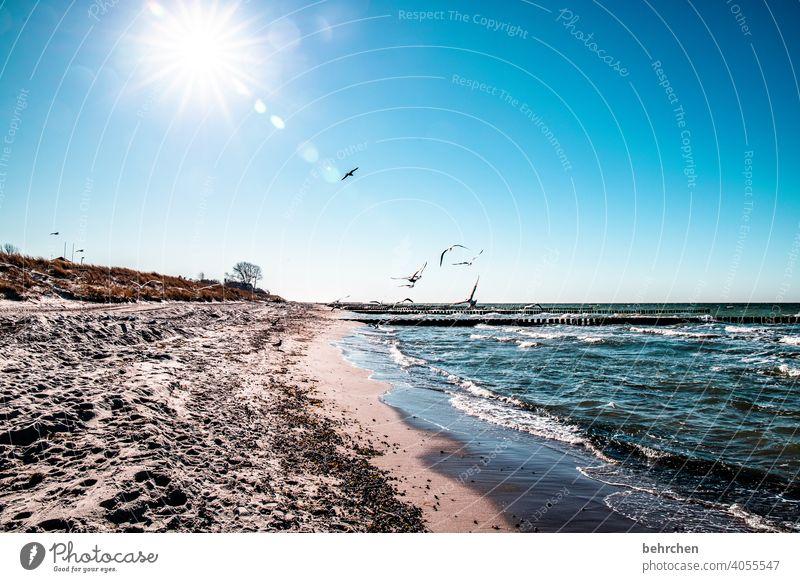 ein tag am meer Vögel möwen Gegenlicht Sonnenstrahlen Sonnenlicht Freiheit Mecklenburg-Vorpommern Ferien & Urlaub & Reisen Ostsee blau Natur träumen Wasser