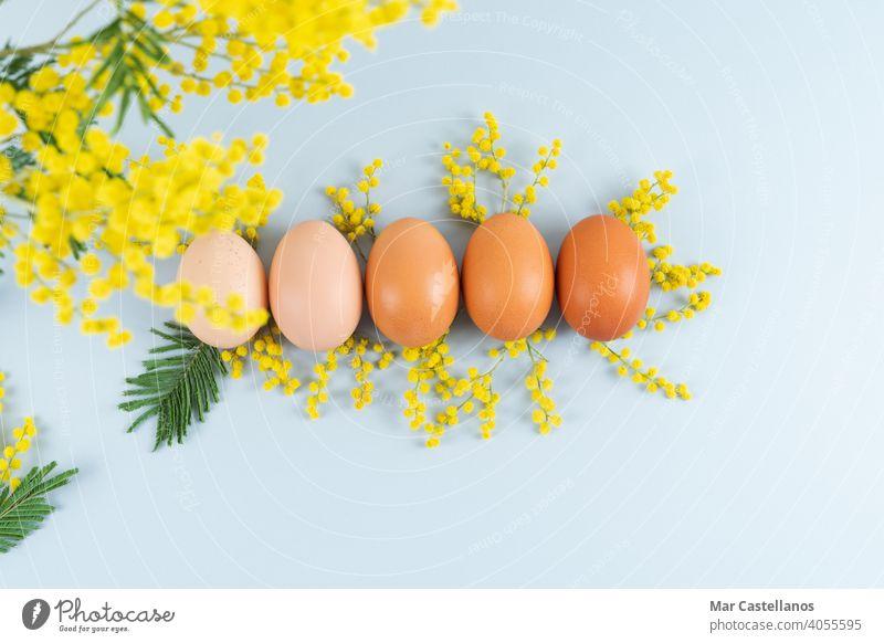 Eier von verschiedenen Schattierungen auf blauem Hintergrund mit gelben Blumen Dekoration auf blauem Hintergrund. Platz zum Kopieren. Aktenordner Mimose