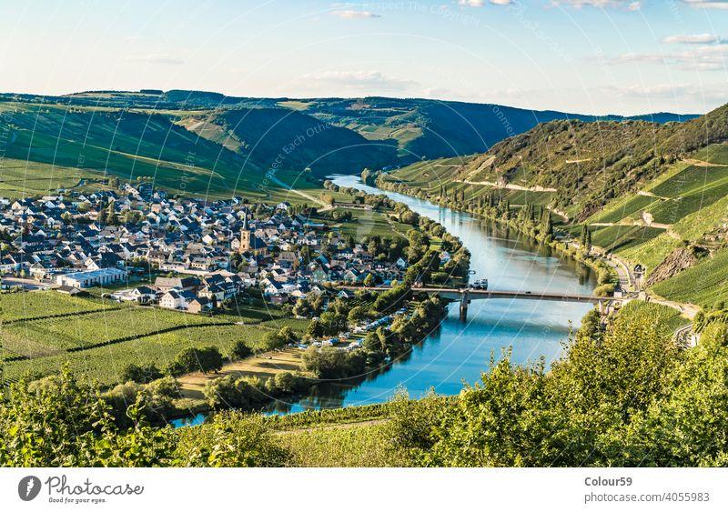 Trittenheim in Deutschland Schönheit Moselschleife Landschaft Pflanzen Europa Natur trittenheim Wein Weinberg Fluss Tal Panorama Trauben Weinbau Tourismus grün