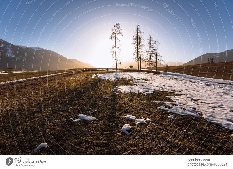Alpine Berglandschaft im Frühling mit schmelzendem Schnee und großen Bäumen mit Gegenlicht, Mieminger Plateau, Tirol, Österreich Baum Schmelzen Berge Wiese
