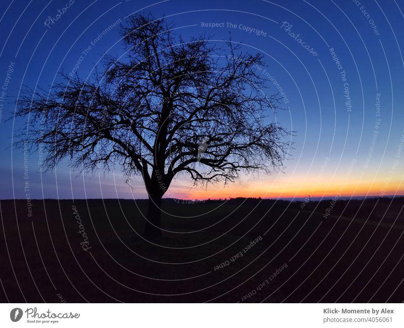 Baum zur blauen Stunde blaue Stunde Dämmerung Abend Sonnenuntergang Himmel gelb-orange Natur Farbfoto Menschenleer schwarz es wird Nacht Silhouette