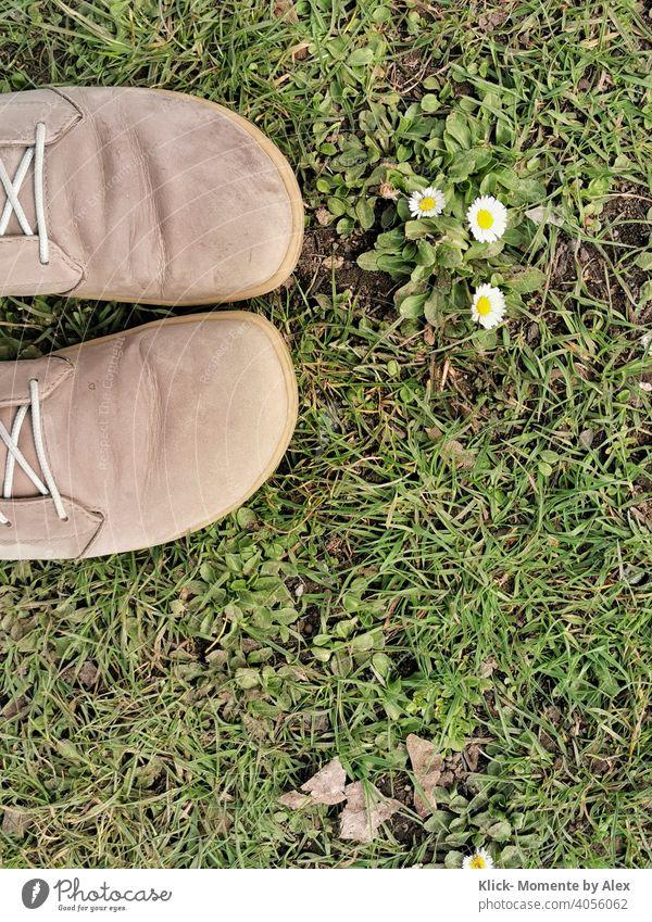 Schuhe im Gras mit Gänseblümchen Blume Wiese grün Frühling Natur Pflanze Außenaufnahme Tag