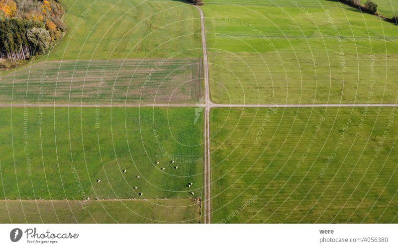 Blick von oben auf landwirtschaftliche Flächen an der Wertach bei Hiltenfingen mit Wiesen, Feldern und weidenden Schafen Bereich Flug Luftaufnahme
